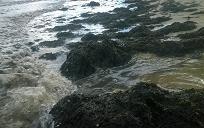 Explaining the phenomenon of massive seaweed washed ashore dead sea Quang Binh