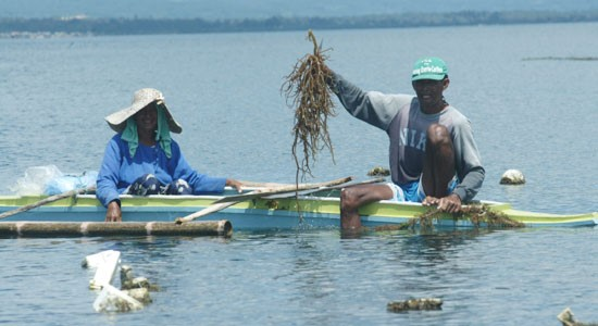 More aid for seaweed pushed