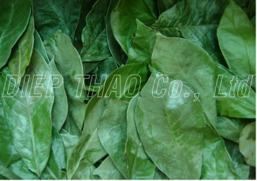 Dried graviola leaf