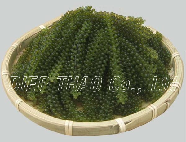 Fresh Seagrape/Green Caviar
