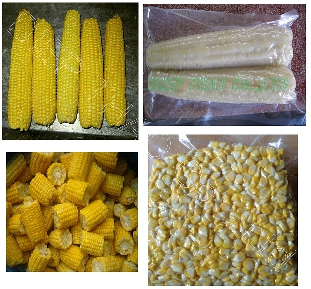 Sweet corn - maize